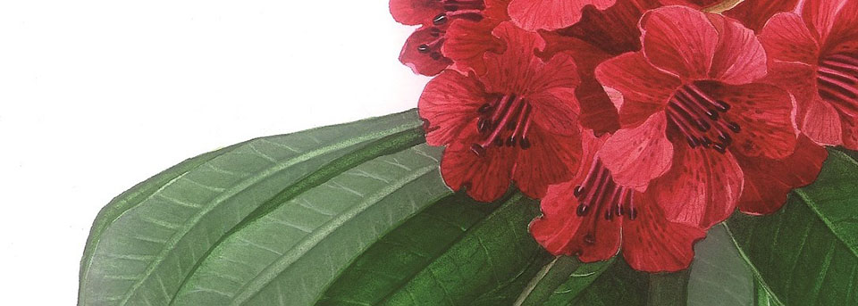 Botanical Prints show artists in Kathmandu